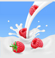 red raspberry fruits and milk splash 3d vector image