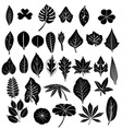 silhouette leaves set vector image
