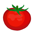 Tomato isolated on white background vector image