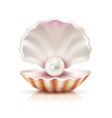 shell pearl realistic isolated image vector image