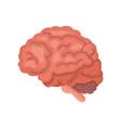 human brain anatomy cartoon icon isolated vector image