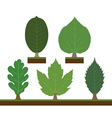 walnut linden oak maple and chestnut vector image vector image