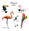 colorful exotic fauna concept vector image