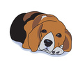 Sleepy beagle vector image