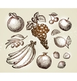 Set food sketch Hand-drawn fruits such as grape vector image