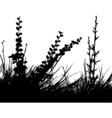 foliage design vector image