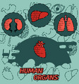 human organs flat concept icons vector image