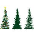 three spruce trees vector image
