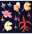 Tropical Flowers in Watercolor Style vector image