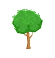 Tall Green Lime Tree Natural Landscape Design vector image