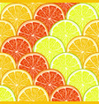 orange lemon and grapefruit slices vector image