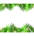 Leaves of palm tree on white background vector image vector image