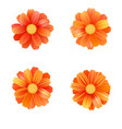 set of isolated yellow gerbera or daisy vector image
