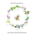 Honey banner with wild flowers wreath and bee vector image