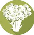Broccoli Icon vector image