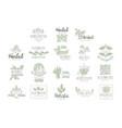 alternative medicine center with oriental herbal vector image
