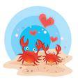 Crabs on beach vector image