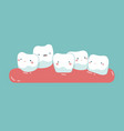 tooth growing in front or behind another tooth vector image