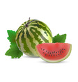 Watermelon with slices vector image