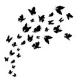 silhouette black fly flock of butterflies vector image
