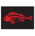skeleton of a fish vector image vector image
