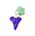 icon of red ripe grapes on vector image