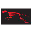 skeleton of a dinosaur vector image vector image