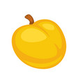 small fresh apricot vector image