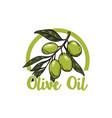 extra virgin olive oil olive branch design vector image