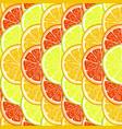 orange lemon and grapefruit slices vector image