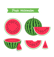 Set of fresh ripe watermelon and slices vector image