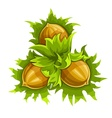 Cluster of three ripe vector image