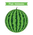 Round Fresh Watermelon vector image