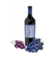 Bottle of Red Wine and grapes vector image
