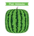 Square Fresh Watermelon vector image vector image