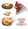 Set of chicken farm products vector image