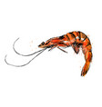 colored hand sketch shrimp vector image