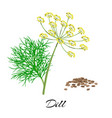 fresh dill isolated on white background vector image
