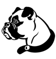 boxer head black and white vector image vector image