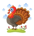 Cute cartoon character turkey vector image