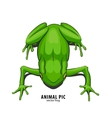Illutration of frog vector image vector image