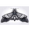 Butterfly moth hand drawn linear style vector image