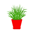 Grass in red flower pot Growing Icon Isolated vector image