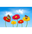 Nature spring gerber flowers with butterflies vector image