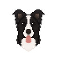 border collie dog head in pixel art style vector image