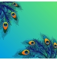 Background design with peacock feathers vector image