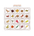 colored sketch indian spices set vector image