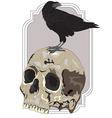 Black Raven Sitting on Skull vector image