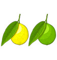 lemon and lime colored hand drawn sketch vector image