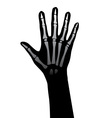 hand xray vector image vector image